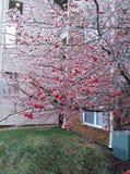 Ijsboom met rode bessen royalty-vrije stock afbeelding
