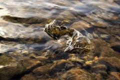 Ijsclose-up in het water Stock Afbeelding