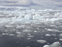 Ijsgebied, Antarctica Stock Foto