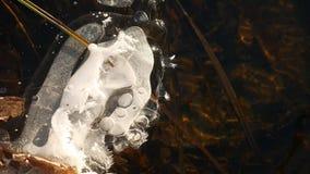 Ijskegel, ijs stromende bosstroom in het recente Landschap van de de winter Mooie Aard stock videobeelden