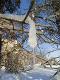 Ijskegels vreemde vormen die van de takken van een boom hangen Royalty-vrije Stock Foto's