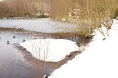 Ijskoude meer, zon, eenden, vogels, en sneeuw - Frankrijk Royalty-vrije Stock Foto's