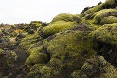 Ijslands mos en vulkanische rotsen/IJsland Royalty-vrije Stock Afbeelding