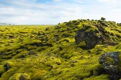 Ijslands mos en vulkanische rotsen/IJsland Stock Afbeeldingen