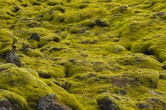 Ijslands mos en vulkanische rotsen/IJsland Royalty-vrije Stock Afbeeldingen