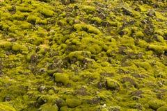 Ijslands mos en vulkanische rotsen/IJsland Stock Foto