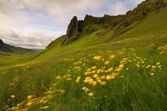 Ijslandse die bergvallei door gele bloemen in een winderig weer wordt behandeld Stock Foto