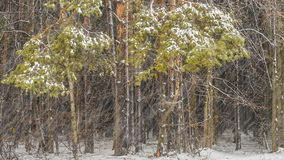 Ijsonweer in het bos stock videobeelden