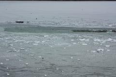 ijsschol stock afbeeldingen