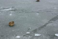 ijsschol stock afbeelding