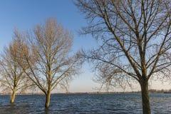 IJssel flodslättar Giesbeek Gelderland Royaltyfri Bild