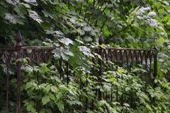 Ijzer ernstige omheining in wild struikgewas van groene vegetatie in de oude begraafplaats royalty-vrije stock foto