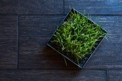Ijzerpot met groen gras op een donkere tegel Stock Foto's