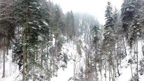 Ijzig bos in de bergen stock videobeelden