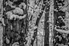Ijzig de winterlandschap in sneeuw bos, zwart-wit stock afbeeldingen