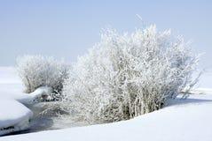 Ijzig en zeer koud Stock Foto