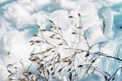 Ijzig glinsterend gras in een de winteropen plek een magische wereld van de glaswinter stock fotografie