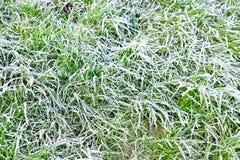 Ijzig Gras stock foto