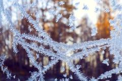 Ijzig sneeuwvlokpatroon op een de wintervenster, buiten het bos bij zonsondergang royalty-vrije stock fotografie