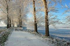 Ijzige bomen bovenop Nederlandse dijk Stock Foto's