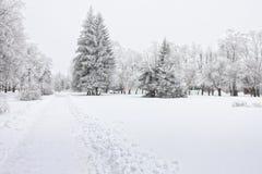 Ijzige bomen in de stad in koude de winterdag Royalty-vrije Stock Afbeelding