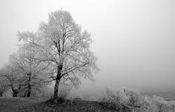 Ijzige bomen en mist royalty-vrije stock foto
