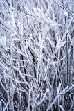 Ijzige de winterachtergrond met ijzige takken en takjes Royalty-vrije Stock Afbeelding