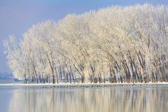 Ijzige de winterbomen Stock Afbeelding