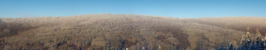 Ijzige Heuvel in Binnenlands Alaska op een Koude Dag Stock Foto
