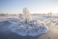 Ijzige ochtend bij boslandschap met de bevroren installaties, de bomen en het water Stock Afbeeldingen