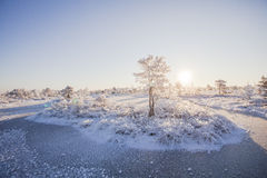 Ijzige ochtend bij boslandschap met de bevroren installaties, de bomen en het water Royalty-vrije Stock Foto's