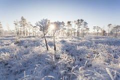Ijzige ochtend bij boslandschap met de bevroren installaties, de bomen en het water Royalty-vrije Stock Afbeeldingen