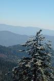 Ijzige Pijnbomen bij de Koepel GSMNP van Clingma Stock Foto