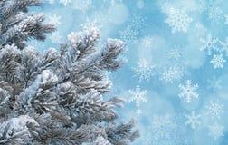 Ijzige pijnboomtakjes tegen blauwe achtergrond met sneeuwvlokken Royalty-vrije Stock Fotografie