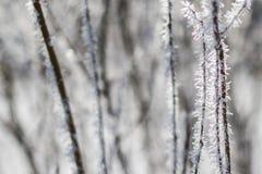 Ijzige takken en ijskristallen Royalty-vrije Stock Afbeeldingen