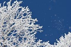 Ijzige takken op een koude de winterdag met vorst die in de lucht drijven royalty-vrije stock foto's