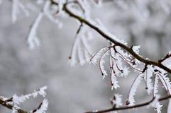 Ijzige takken van boom in de winter Royalty-vrije Stock Afbeelding