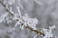 Ijzige takken van boom in de winter Royalty-vrije Stock Foto's