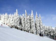 Ijzige zonnige de winterdag Noordelijke Schoonheids Aziatische bergen Stock Foto