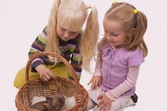 Ik aanbid mijn katten Stock Foto