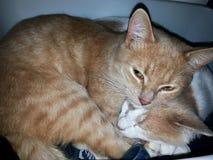Ik heb mijn die kattenoog op u wordt opgeleid Royalty-vrije Stock Fotografie