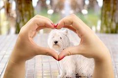 Ik houd van Honden Stock Foto's