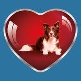 Ik houd van honden, zijn zij in mijn hart! Stock Foto