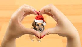 Ik houd van mijn Kerstmispuppy Stock Afbeeldingen