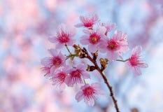 Ik houd van u Devi Tigress Flower Royalty-vrije Stock Fotografie