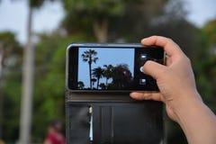 Ik kan de bomen slechts zien thrue celphono stock foto