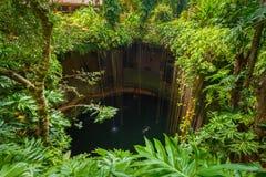 Ik-Kil Cenote near Chichen Itza. In Mexico Stock Images