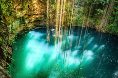 Ik-Kil Cenote near Chichen Itza, Mexico. Stunning cenote with transparent waters and hanging roots Royalty Free Stock Photo