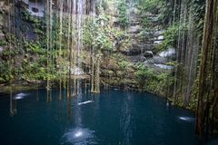 Ik-kil cenote Yucatan Mexico. Lone swimmer in Ik-kil cenote in Yucatan Mexico Stock Photography