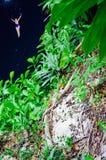Ik Kil Cenote, Yucatan, Mexico Royalty Free Stock Photo